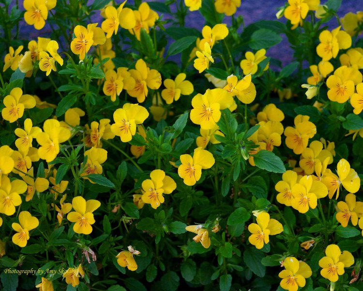 Yellow Flowers copy.jpg 2