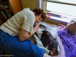 Model Molly for Feline Acupuncture
