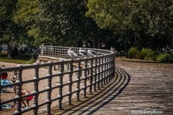 Seagulls sitting on railing on boardwalk