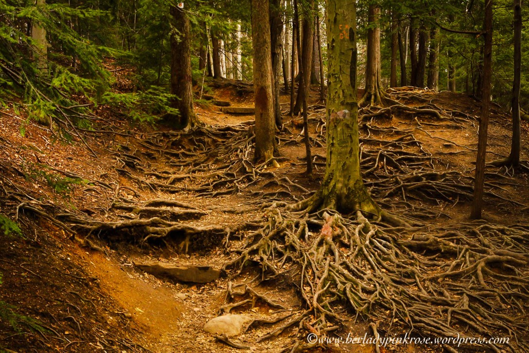 LR Eternal Flame Roots--5