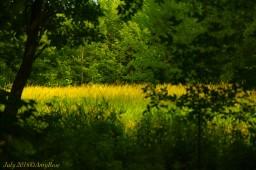 Golden Summertime