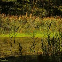 Hidden Pond (2 IMAGES)