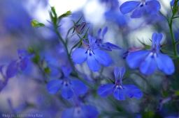 Flower Wisdom