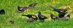 Bye-Bye Birdies