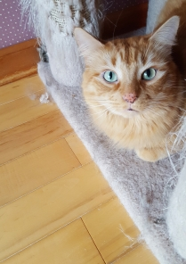 Rusty's eyes are captivating!