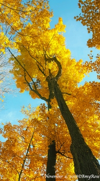 Amazement so evident as I stared up at this gorgeous tree