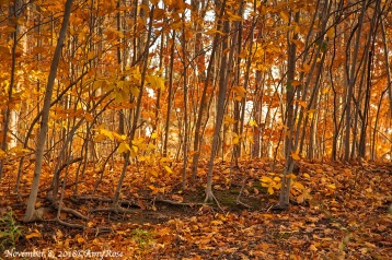 Standing in a gully I aimed up focusing on the roots and filling the entire frame with the orange colors.