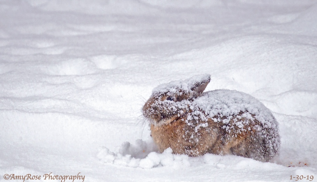 Aw, poor bunny!