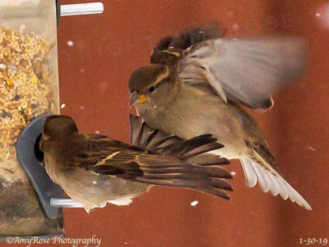 These Sparrows mean business!