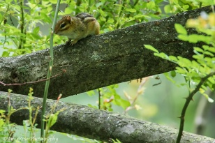Hey there, Mr. Chipmunk. Love this composition!
