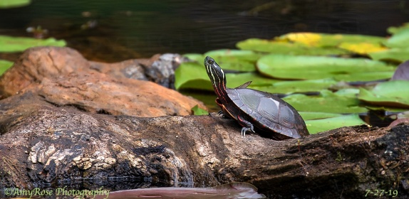 Hello, Turtle.