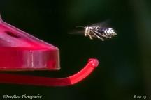 Whoa! A BEE in flight!