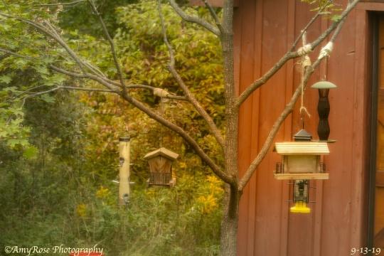 Feeders in our backyard