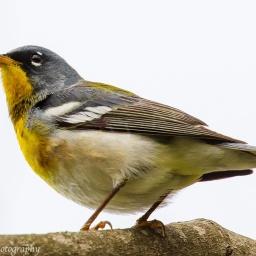 Bird Heaven